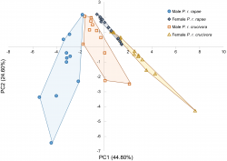 Pheromonal differences between sexes and subspecies of Pieris rapae