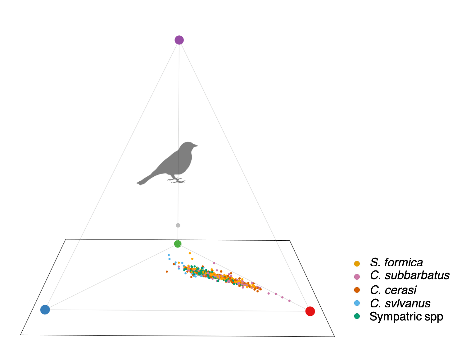 Mimic coloration in avian morphospace