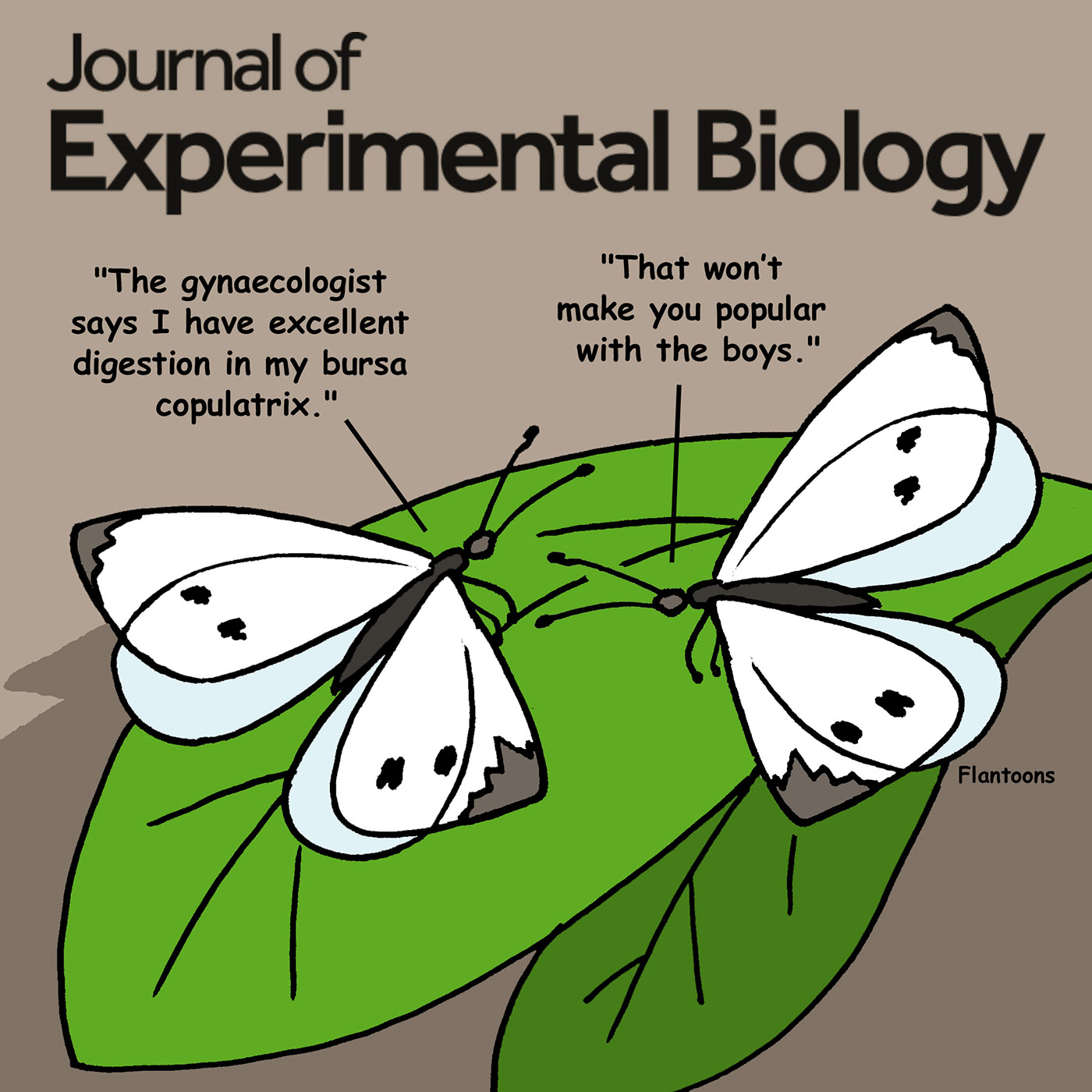 Journal of Experimental Biology coverage of our research on Pieris rapae reproductive physiology