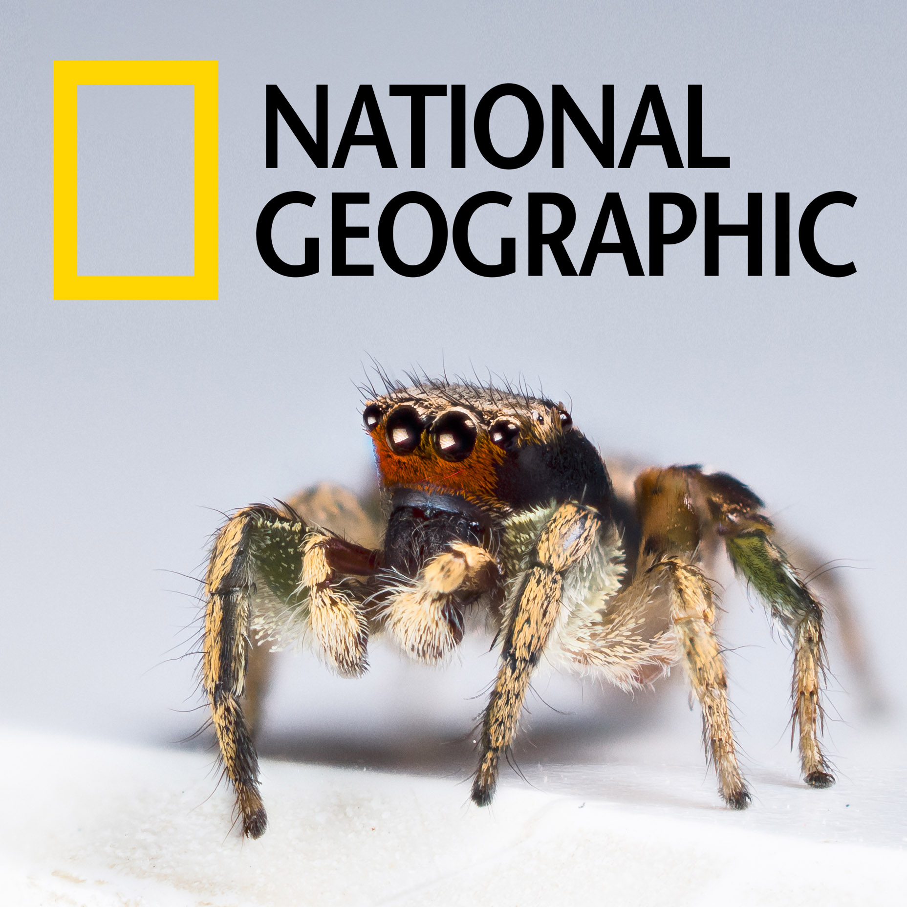 National Geographic coverage of our research on color vision in Habronattus pyrrithrix