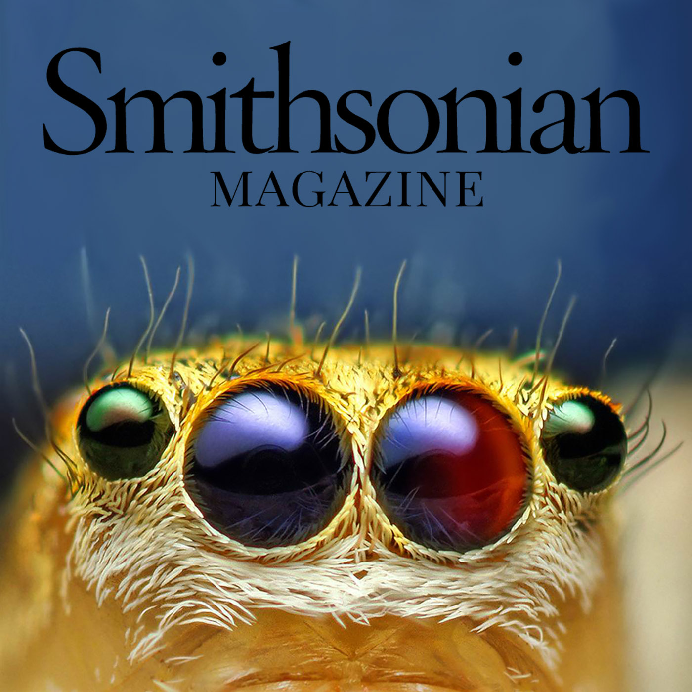 Smithsonian Magazine coverage of jumping spider color vision research